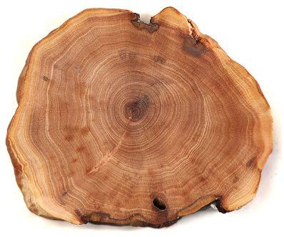 GIGAmacro gigapixel image of tree rings